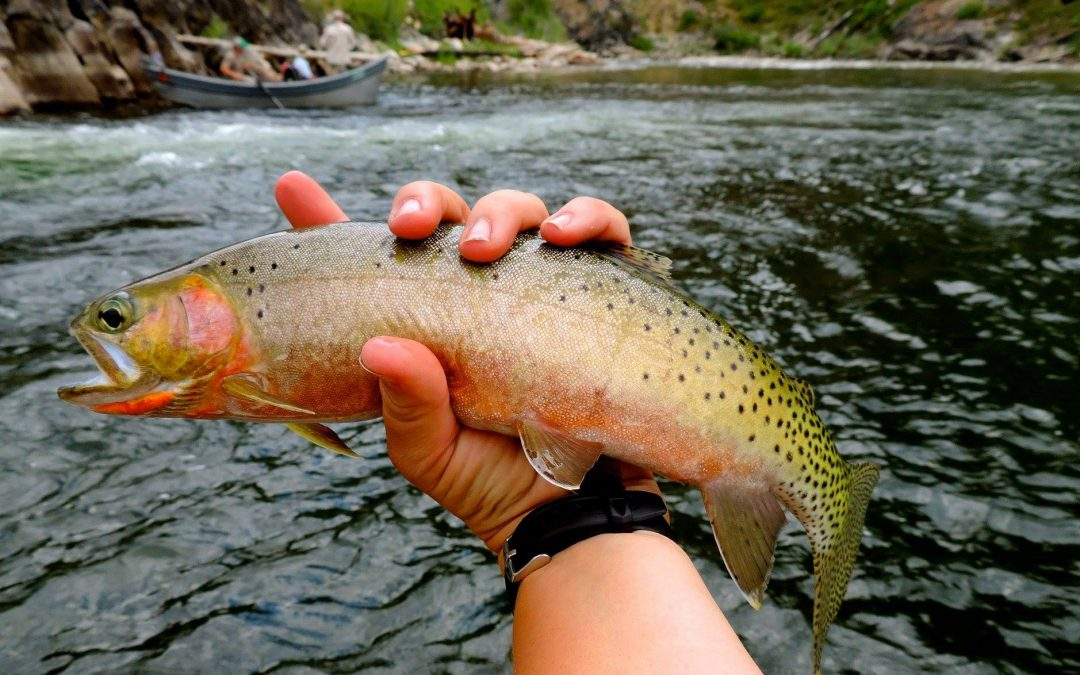 Fall Middle Fork Fly Fishing Trips